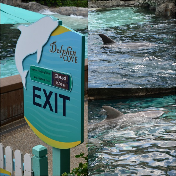 Dolphin Cove at Sea World
