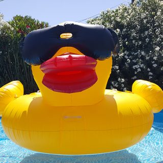 Derby Duck In Pool