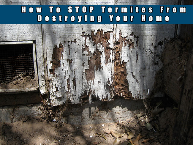 How To Stop Termites