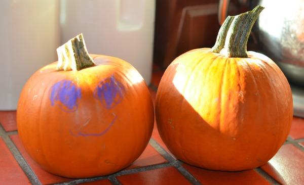 Small fresh sugar pumpkins #shop