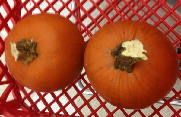 Sugar Pumpkins at Save Mart #shop