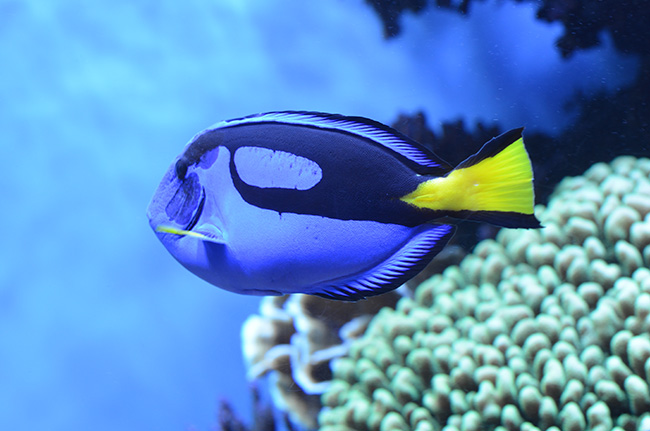 My visit to the monterey bay aquarium findingdoryevent for Finding dory fish tank