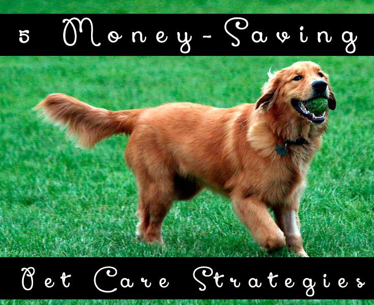 5 Money-Saving Pet Care Strategies