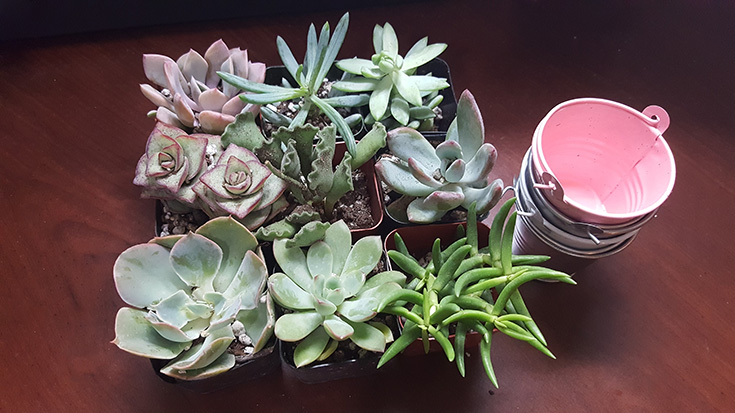 Succulents from The Succulent Source