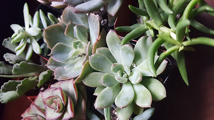 The Succulent Source Review + Unboxing Video