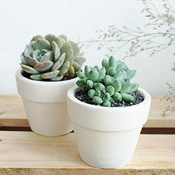 Succulents Box Subscription