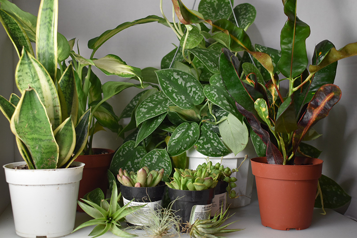 House Plant Shop Review