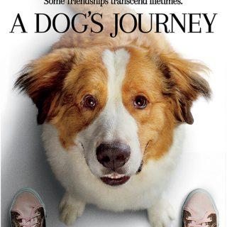 A Dog's Journey – NOW On Blu-Ray + DVD & Digital