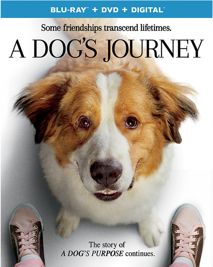 A Dog's Journey – NOW On Blu-Ray + DVD & Digital