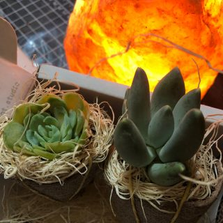 Succulent Studios Subscription Box July