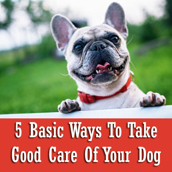 5 Basic Ways To Take Good Care Of Your Dog