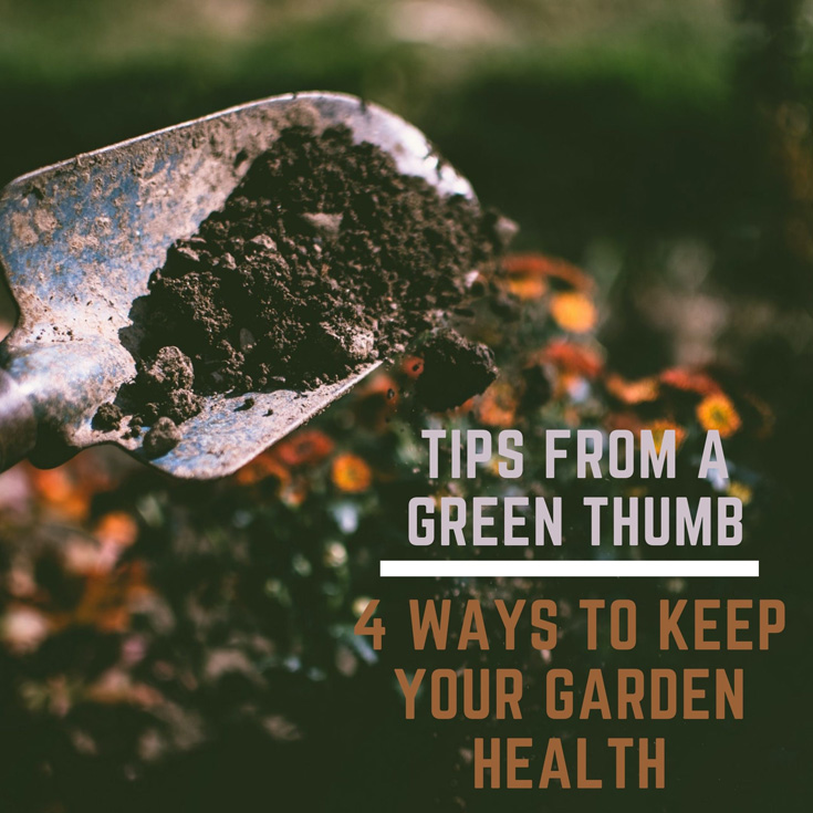 Tips From A Green Thumb: 4 Ways to Keep Your Garden Health